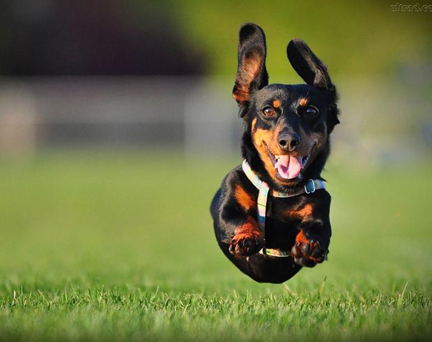 Cão-correndo